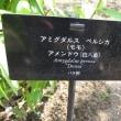 矮性桃の園芸品種名について