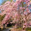 桜 -10-