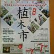 お富士さんの植木市 浅草寺