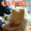 ♪☆新春恒例 新にゃん会 プレゼント編☆♪