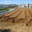 サツマイモ畝の準備