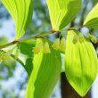 春から初夏に咲く草花(赤塚植物園)