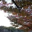 大阪城公園 秋めく
