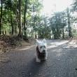 Cocoちゃんのお散歩に・・・♪
