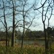 桃まつり直前の古河公方公園。
