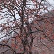 ★冬の残り色 2019