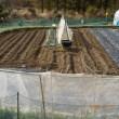 ジャガイモの畝の植え付け準備