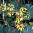 メモ帳775ページ目 素朴な野菊10種
