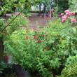 雨のm*s garden*