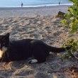 浜辺であそぼ