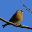 大室公園の野鳥2019(その4)
