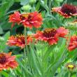 保土谷公園の花たち