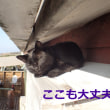 猫スタッフと屋根の点検作業