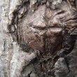 奇妙なマークが木の幹に