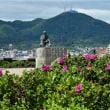 ハマナスと石川啄木と函館山