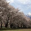 芳春(甲斐駒&八ヶ岳)