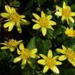 薬用植物園の春の花(2018/3月/~4月)