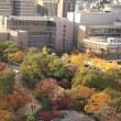 大阪城 紅葉