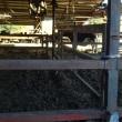 牧場に牛ふん堆肥をもらいに行きました