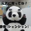 今週の手話動画はパンダ!