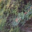 霞川 探鳥 撮影 翡翠(カワセミ)は見つからず、あおじ(?)が撮れました