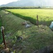 畦の草刈り4回目