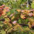 初秋の高野山 キイジョウロホトトギス