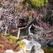 『旧吉田茂邸』 中池