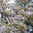 今朝から初雪が降っています。そんな初雪一緒に10年ぶりのお客様もおいで下さいました