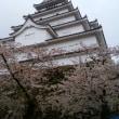 散りゆく桜を眺めて
