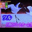 1/16 鶴が本当のオシドリ夫婦