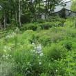Today's garden