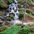 秋の遠足  奥入瀬渓谷ととわだクルーズ