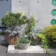 生ごみたい肥の花壇✿