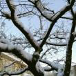 """"""" 雪 """" との遭遇"""