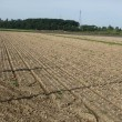 秋色に変化した畑