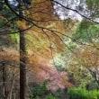 西渓公園紅葉まつり