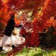 秋が駆け足で過ぎていく
