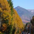 八ヶ岳と紅葉と