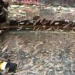 金魚入荷と中古品