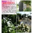 花巡り 「サツキ-40」 田宮の電電神社