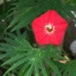 夏至に咲く花