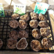 キャベツ サラダ菜 ふだん草の種を蒔きました