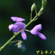 2017/09/25 千石谷からの直登りで撃沈