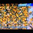5/27 ミツバチが大量死 国はこの重要性に気がついてない