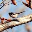 """「冬の野鳥」をテーマに開催された """"愛知県昭和の森を歩く会"""" で観察できた野鳥たち"""