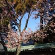 〈催事〉0561:「宮地嶽神社」節分祭