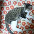 ノーマのトリミングと家の猫