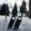 スノーシュー〜snowshoe