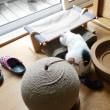 チラ見のたんちゃんw【動画】